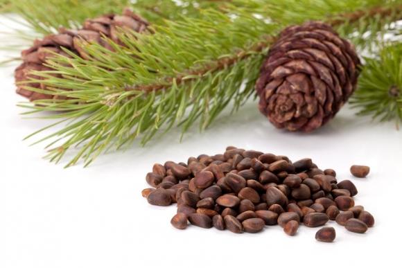 Кедровый орех полезные свойства